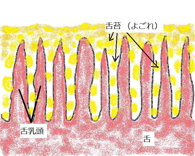 舌と舌苔(よごれ)
